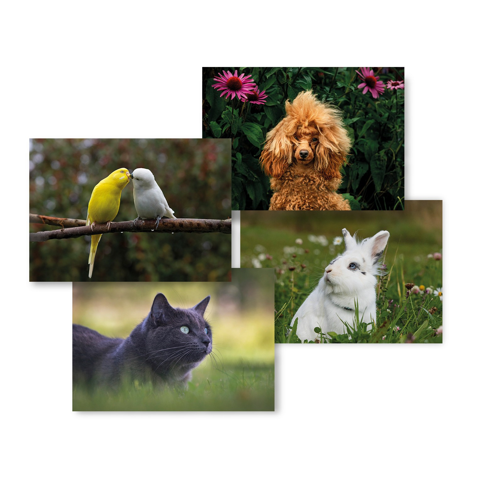 postal stationery cards pets